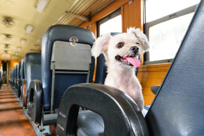 O cestování se zvířaty
