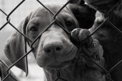 Způsob oznámení o týrání zvířat